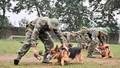 """Tết Mậu Tuất thăm trường huấn luyện """"lính bốn chân"""""""