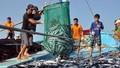 Khai thác, nuôi trồng thủy sản gặp nhiều thuận lợi
