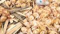 Đồng Nai: Phát hiện gần nửa tấn gà không rõ nguồn gốc đang trên đường tiêu thụ