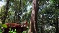 Gần 24 triệu USD quản lý rừng và bảo tồn đa dạng sinh học tại Quảng Nam và TT. Huế