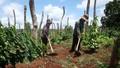 Gia Lai: Tín dụng chính sách góp phần đảm bảo an ninh trật tự ở nông thôn