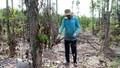 Không có việc nông dân phá tiêu còn tốt để bán rễ