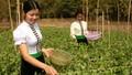 """Bảo hiểm xã hội tự nguyện: """"Tấm lưới"""" an sinh cho lao động khu vực phi chính thức"""