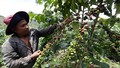 Hiệu quả an sinh vững chắc của vốn chính sách tại Đắk Nông
