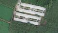 Long Thành (Đồng Nai): Chính quyền bất lực trước một trại gà?