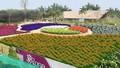 Công viên hoa hồng và thông điệp văn hoá