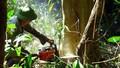 Phó Thủ tướng đề nghị xử lý nghiêm vụ chặt phá rừng phòng hộ ở Phú Yên