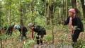 Bảo vệ rừng thiêng và ước mơ giản dị của trưởng bản