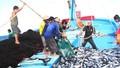 Chống khai thác thủy hải sản bất hợp pháp (IUU): Phải làm quyết liệt để tạo sự chuyển biến