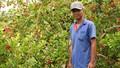 Người thương binh làm giàu từ vườn cây Si rô