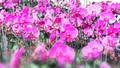 [Truyện ngắn] Duyên hoa
