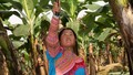 Tiếp thêm động lực cho đồng bào vùng cao Lào Cai làm giàu