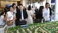 Novaland khai trương sàn giao dịch Cam Ranh