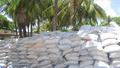 Tăng cường chống gian lận thương mại, gỡ khó cho ngành mía đường