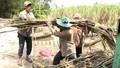 Hậu Giang bàn giải pháp gỡ khó cho người trồng mía