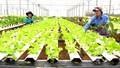 Rào cản khiến doanh nghiệp khó đầu tư dự án nông nghiệp lớn