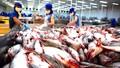 Lý do cá tra Việt Nam chưa phát triển như kỳ vọng