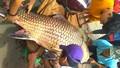 Mua bán, tàng trữ, vận chuyển trái phép thủy hải sản quý hiếm: Xử lý thế nào?