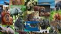 Bảo vệ động vật hoang dã: Nước mắt vẫn rơi vì 'điểm nghẽn'