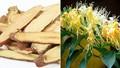 Nhiều người quan tâm về trà thảo mộc giúp tăng cường hệ miễn dịch