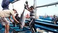 Giảm sản lượng khai thác để bảo tồn nguồn lợi biển