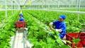 Bài toán tăng thu hút FDI trong lĩnh vực nông nghiệp