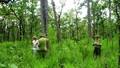 68 văn bản về rừng sẽ được thay bằng 1 nghị định