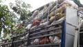 Nghệ An bắt xe chở 10 tấn xương bốc mùi hôi thối