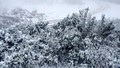 Lần đầu tiên  trong lịch sử, băng tuyết xuất hiện miền Tây Nghệ An