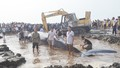 Phát hiện cá voi 'khủng' chết trên biển Diễn Châu