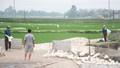 Nghệ An có Công điện khẩn phòng chống dịch cúm gia cầm