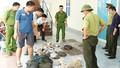 """Phát hiện 37 cá thể động vật hoang dã """"vượt biên"""" vào Việt Nam"""