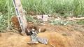 Vụ điện giật chết 4 người ở Nghệ An: Chủ đầu tư chưa có lệnh khởi công