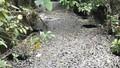 Cá chết trắng kênh Hào Thành