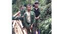 Tuần tra phát hiện hai người Lào chặt hai gốc Samu trái phép