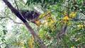 Liên tiếp phát hiện thi thể hai người bên bìa rừng