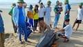 Chôn cất cá voi nặng khoảng 1 tấn dạt vào bờ biển