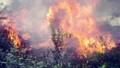 Hai người tử vong vì nắng nóng và cháy rừng ở Nghệ An
