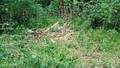 Cặp voi ngày vào rừng ngủ, đêm ra phá hoại hoa màu khiến người dân lo lắng