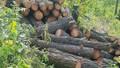 Kiểm lâm Nghệ An mời công an điều tra vụ phá rừng phòng hộ ở huyện Hưng Nguyên