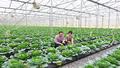 Cho vay nông nghiệp ứng dụng công nghệ cao: Lo ngại tiềm ẩn rủi ro vì chưa có tiền lệ