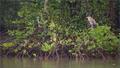 HSBC chung tay cùng WWF - Việt Nam tái sinh 150 hecta rừng ngập mặn tại Vườn Quốc gia Mũi Cà Mau