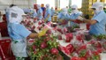Việt Nam phấn đấu trở thành một trong 5 quốc gia xuất khẩu rau quả hàng đầu thế giới vào năm 2030