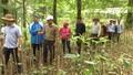 Bộ Nông nghiệp đề nghị Quảng Nam cân nhắc chuyển đất rừng tự nhiên để phát triển sâm Ngọc Linh
