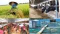 Thủ tướng đồng ý kéo dài hiệu lực Quyết định 22 về chính sách hỗ trợ bảo hiểm nông nghiệp