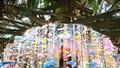 Hội Xuân Cúc Phương: Tái hiện nghi thức dựng cây nêu của người Mường