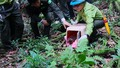 Tái thả 92 cá thể động vật hoang dã tại Vườn quốc gia Cúc Phương