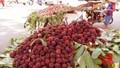 Người Hà Nội háo hức lùng mua... trái cây Trung Quốc giá cao?