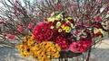 Bí quyết giữ hoa tươi đẹp ngày Tết nắng nóng