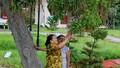 Háo hức hái lộc cây lộc vừng hàng trăm năm tuổi nở hoa sớm